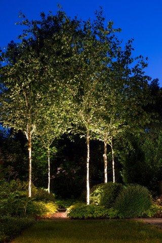 Gartenbeleuchtung Köln, Lichtplanung Bäume