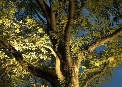 Gartenbeleuchtung Baumkrone
