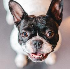 Der Hund von kunstlicht